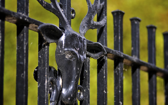 Antlers On A Fence