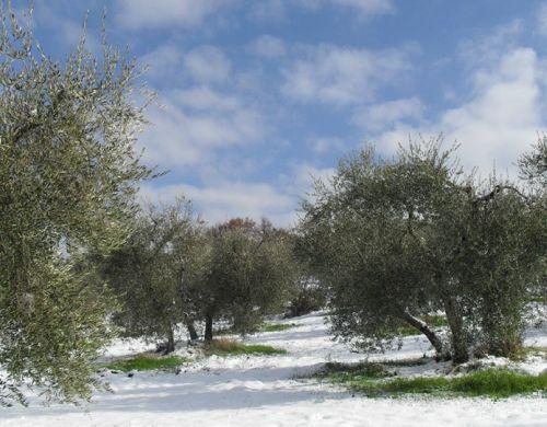 L'azienda Agricola DE Triachi, ad Arcidosso