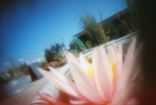 pinhole water lilly