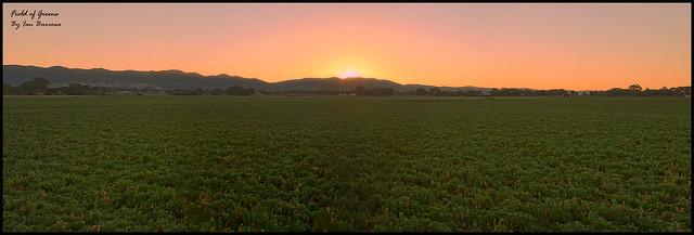 Field_of_Greens