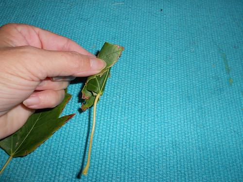 Roll leaf up