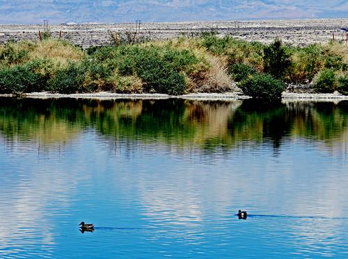 blue usa lake bird water reflections landscape unitedstates nevada ducks nv henderson preserve 2012 nikoncoolpixp500