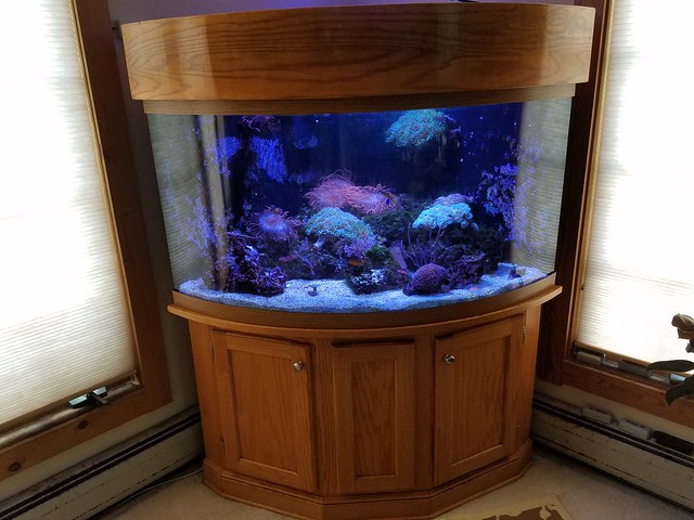 Paid 2400 At ABC Reefs For Just Tank Stand Hood Sump Chamber Looking 2k Everything Or Bo