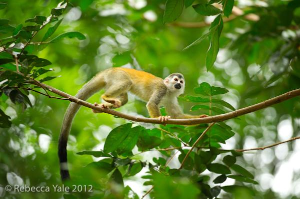 RYALE_Costa Rica_7