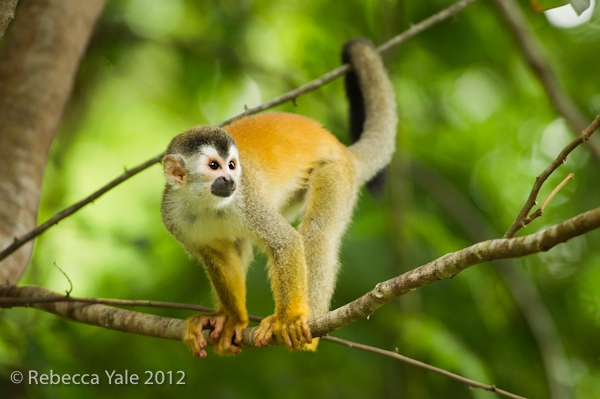 RYALE_Costa Rica_5