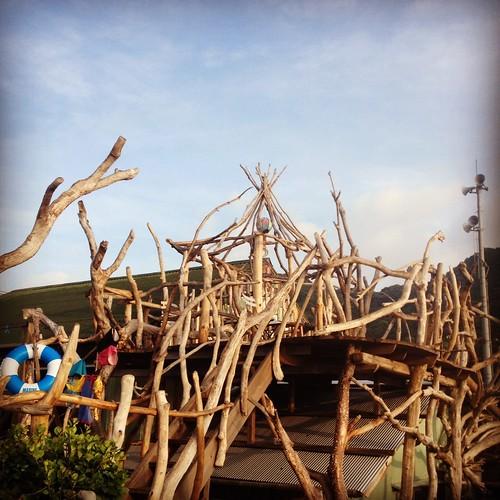 tree house@kochi