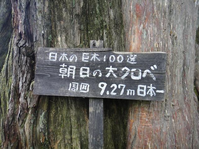 日本の巨木100選