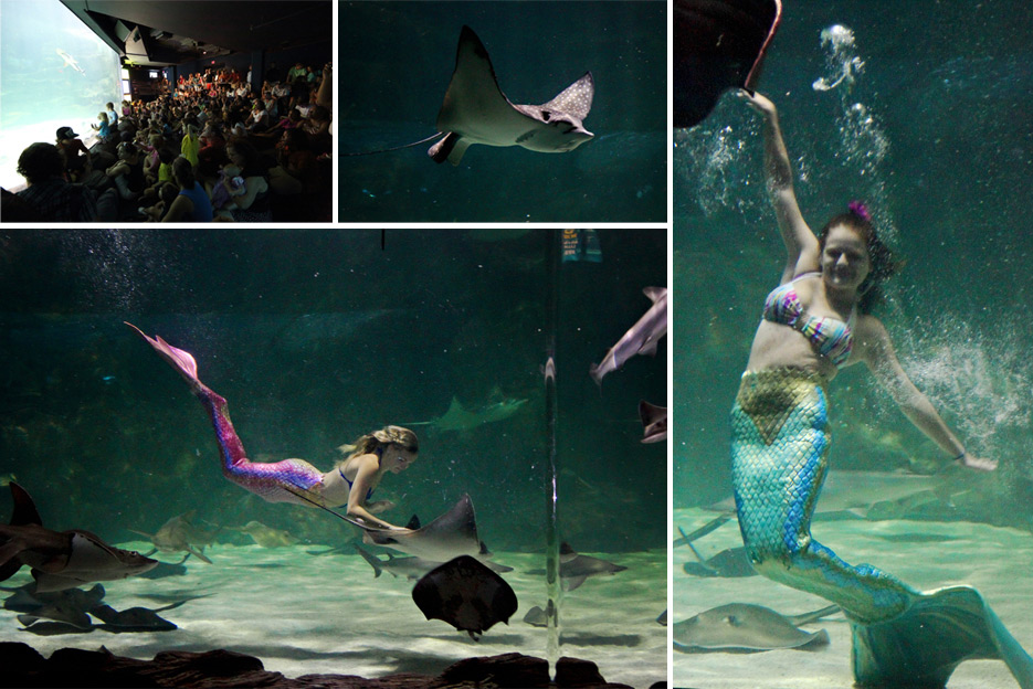 072612_10_aquarium10