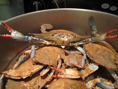 AA Live Blue Crabs