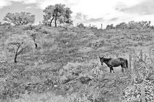 Chazumba, Agosto 2012 (81)