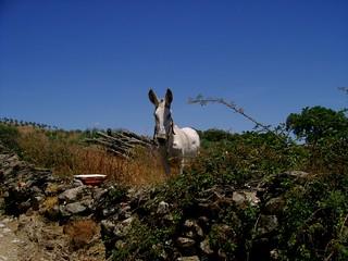 Un âne près de Macedo de Cavaleiros