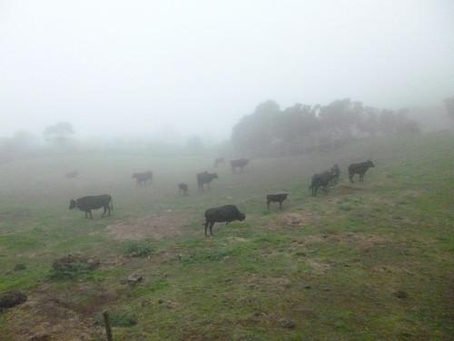 touros s jorge