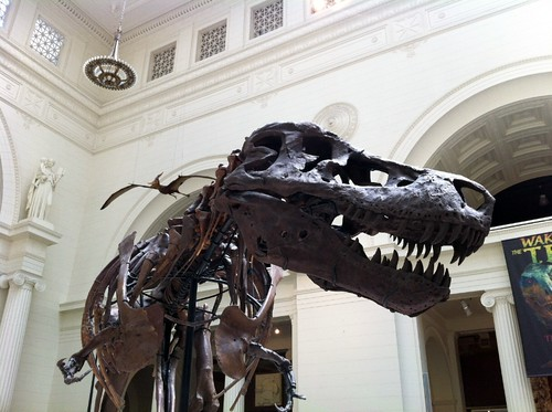 Five Reasons to Visit the Field Museum in Chicago