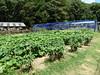 ブルーベリーヒル勝浦の農園