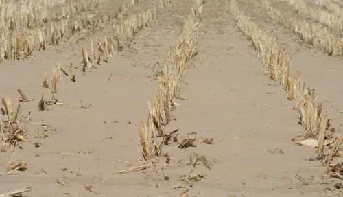 Fwd: Corn field