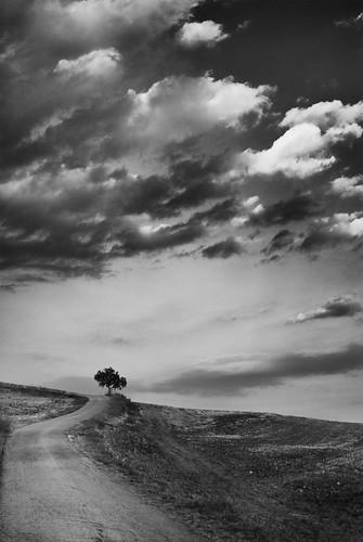 tree clouds landscape nuvole bn d200 albero nikkor35mmf18