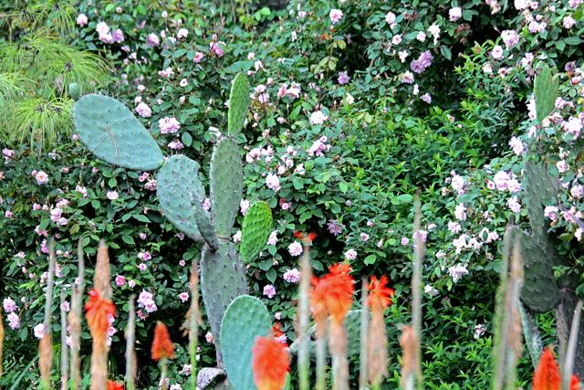 Opuntia & Roses