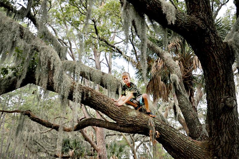 jack in tree