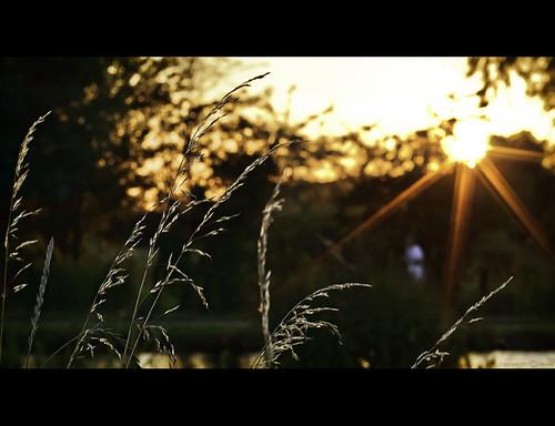 cambridge sunset grass runner jogger starburst goldenlight
