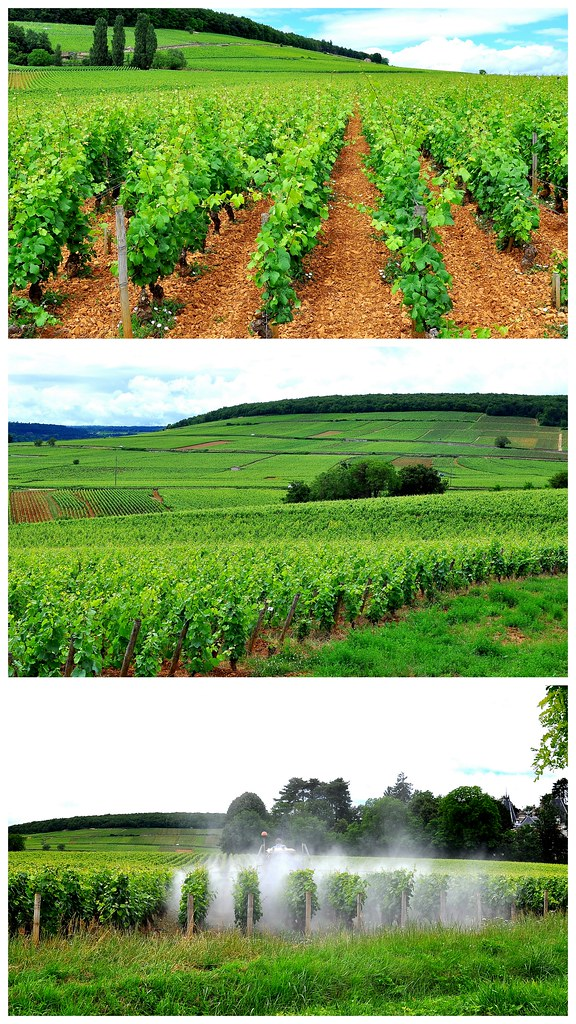 Burgundy, France Collages