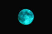 "crop ""blue moon"""