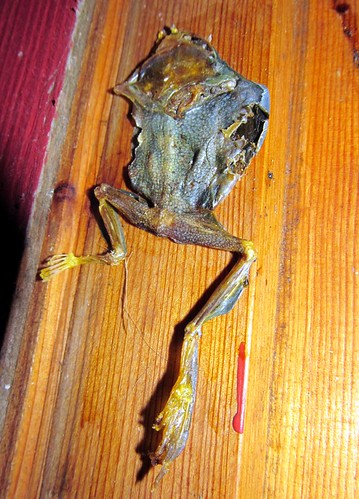 Dead Frog I