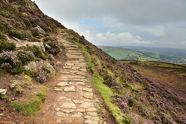 Win Hill, peak district, purple moors and moorland heather