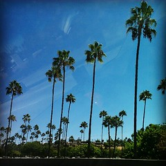 Tall, old palm trees at an RV resort.