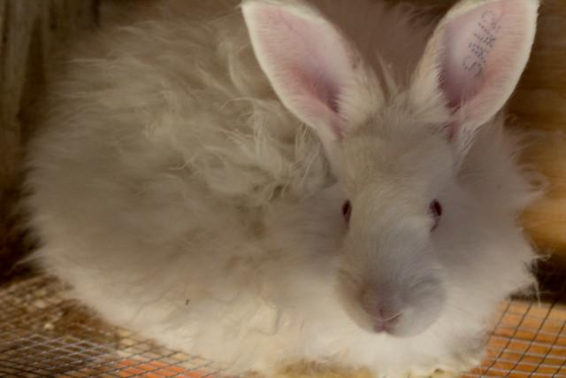 bunny4 (1 of 1)