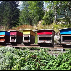 shack, apiary, beehive, rural area,