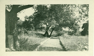 The Wash in 1929