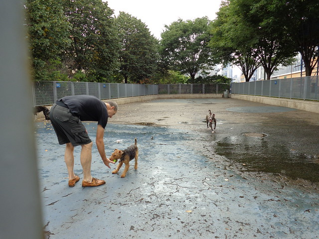 doggie park @ Hudson River Park