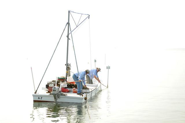 Oyster Aquaculture Apprenticeship
