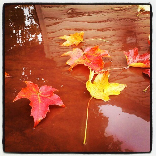 #rainyday #newhampshire #fall #foliage #leaves #leaf #rain