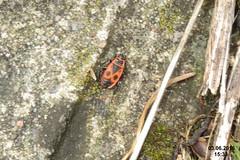 Firebug (Na. by rlwy underpass)