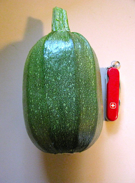 The unusual squash from the garden