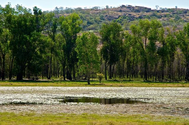 Vista de un billabong en el Parque Nacional Kakadu. Territorio del Norte, Australia.