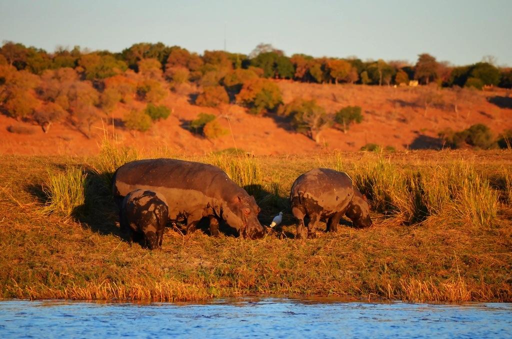 Hippo Zambezi Queen