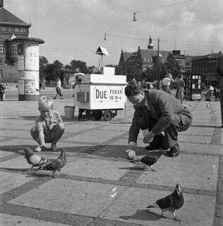Feading pigeons in Copenhagen 1949