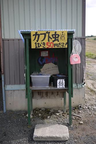 Beetles for sale at roadside stall near Biei (Hokkaido, Japan)