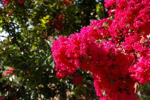 Kew_Gardens-001