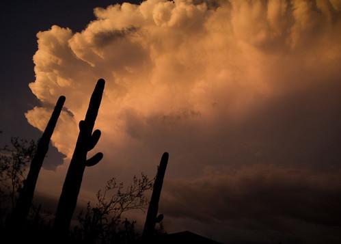 3 saguaro