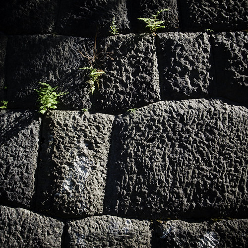 Fern in the Retaining Wall, Imperial Palace, Tokyo