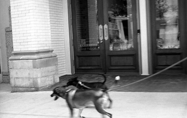 dog walk (downtown Nashville, TN)