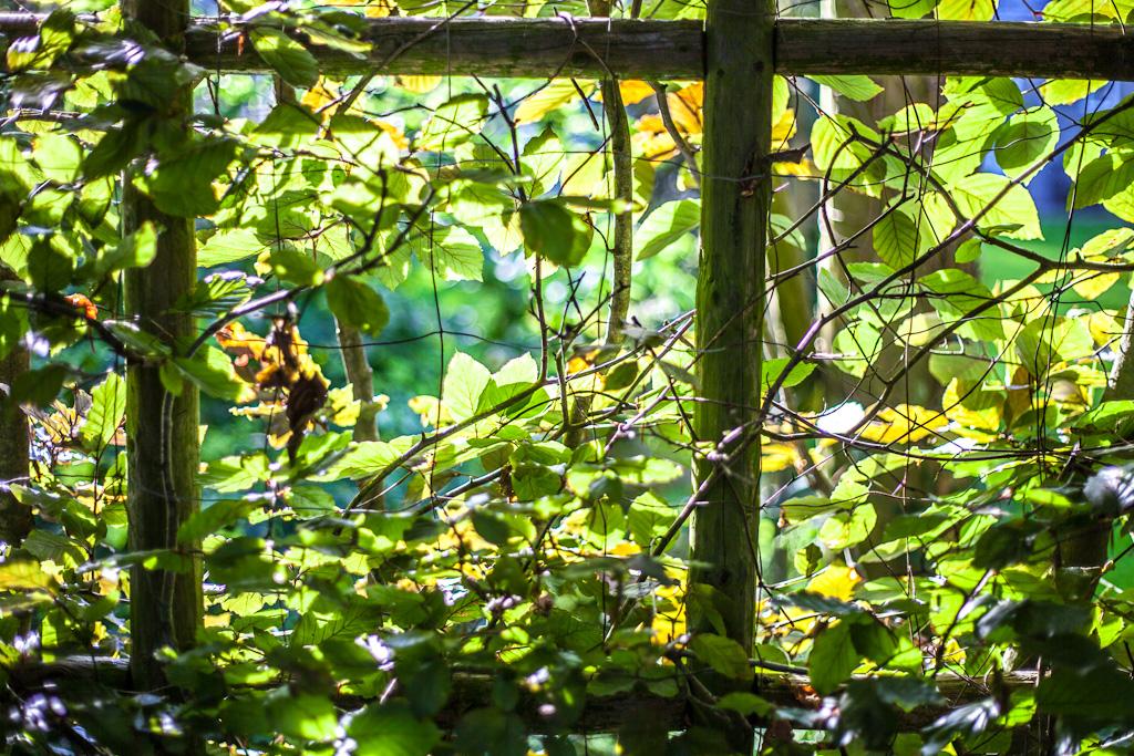 Leafcage
