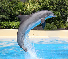spinner dolphin(0.0), animal(1.0), marine mammal(1.0), common bottlenose dolphin(1.0), marine biology(1.0), short-beaked common dolphin(1.0), fauna(1.0), dolphin(1.0), rough-toothed dolphin(1.0), tucuxi(1.0),
