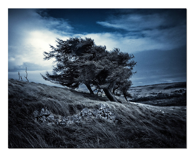 Trees in the wind, Lomond Hills