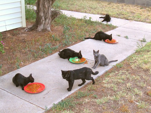 Six stray cats, dropped in for supper