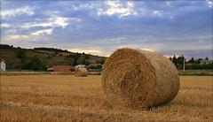 prairie, agriculture, farm, straw, hay, field, soil, grass, plain, harvest, meadow, rural area, grassland,