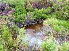 Tour de la plaine d'Uovacce : retour sur la plaine avec le ruisseau dans les bruyères